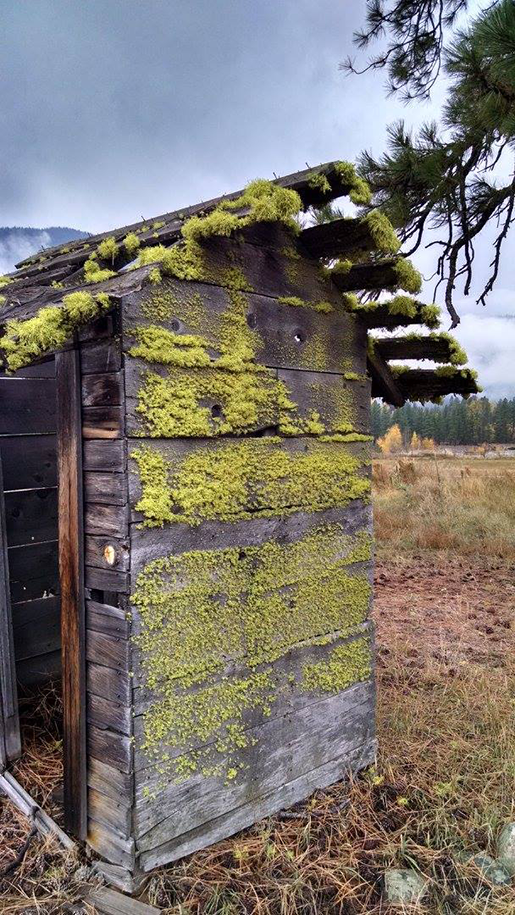 chartreuse outhouse