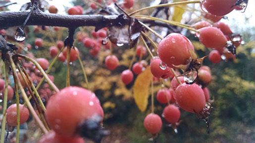 Dewy Fresh Blush